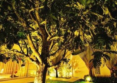 LED garden tree uplighting